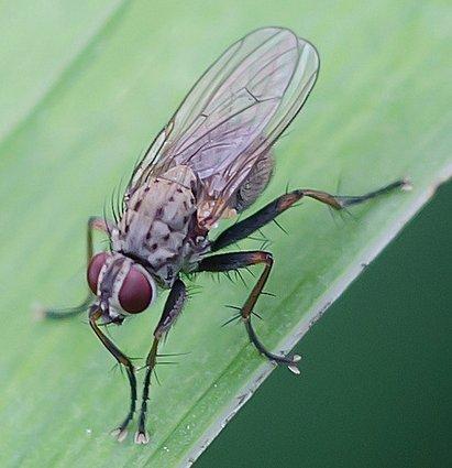 vliegen informatie | vliegen bestrijden - hob gieten, Deco ideeën